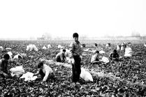 Young laborers. 2013 - Ici, near the Shahr Reza- Iran